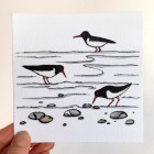 'Oystercatchers' greetings card (new version)
