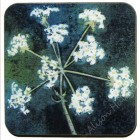 Coaster - Cow Parsley (Sorry sold out, message to order)