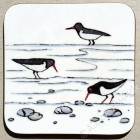 Coaster - Oystercatchers