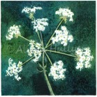 Collograph Print - Cow Parsley